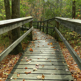 Autumn Bridge by Debi Blankenship