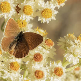 Autumn Butterfly by Angie Vogel