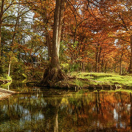 Autumn Cypress Trees Reflection by Judy Vincent