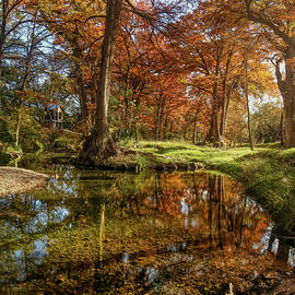 Autumn Cypress Trees Reflection Vertical by Judy Vincent