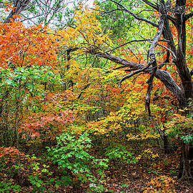 Autumn Dance at Lost Maples by Lynn Bauer