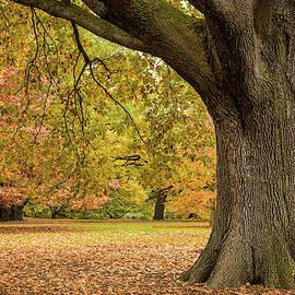 Autumn by Dave Bowman