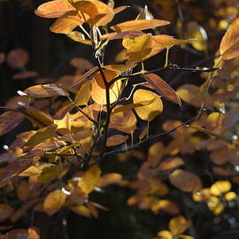 Autumn Essence 6 by Lkb Art And Photography