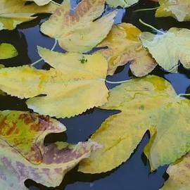 Autumn flow by Abedalrahman Samara