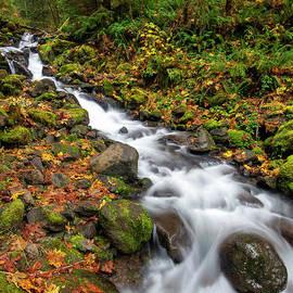 Autumn Flow by Mike Dawson