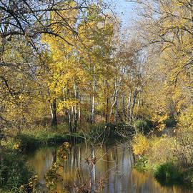 Autumn Forest by Alex Mir