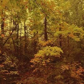 Autumn Forest  by Ian Baird