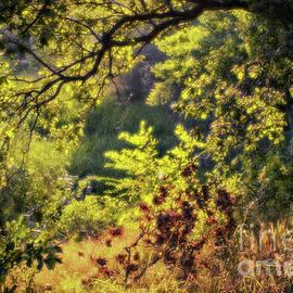 Autumn forest by Igor Baranov