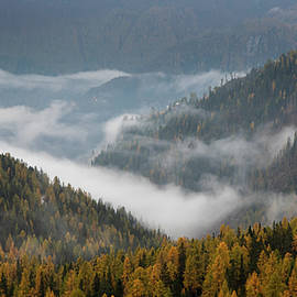 Autumn forest landscape at the dolomites south tyrol in the Italian apls by Michalakis Ppalis
