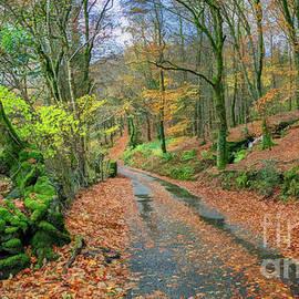 Autumn Forest Snowdonia by Adrian Evans