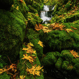 Autumn Glory at Emerald Falls in Columbia River Gorge in Oregon USA by Vishwanath Bhat