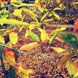 Autumn Glory by Rebecca Harman