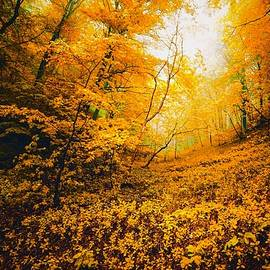 Autumn Gold by KaFra Art