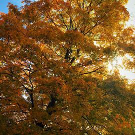 Autumn Golden  by Jeremy Lyman