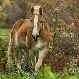 Autumn Horse Pasture by Janice Pariza