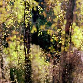 Autumn in Britain Park by Dubi Roman