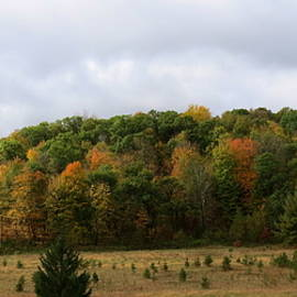 Autumn In Dunn County Wisconsin by Kay Novy