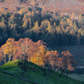 Autumn in Glenshee by Dave Bowman