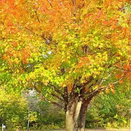 Autumn in Minnesota by Ann Brown