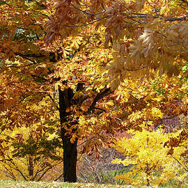 Autumn in Quebec 2 by Lieve Snellings