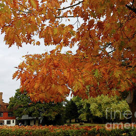 Autumn in Surrey by Kathryn Jones