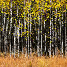 Autumn in the North Fork 5 by Matt Hammerstein