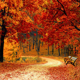 Autumn in the Park - DWP1072821 by Dean Wittle