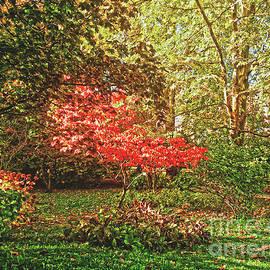 Autumn In The Park by Jasna Dragun