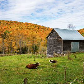 Autumn in Vermont in the Woodstock Countryside 2 by Ron Long Ltd Photography