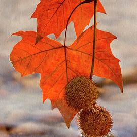 Autumn Kiss 2 by John Rogers
