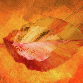 Autumn Leaves Design by Terry Davis