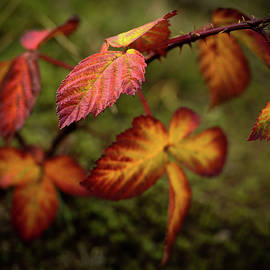 Autumn leaves in the foreground by Anita Gendt van