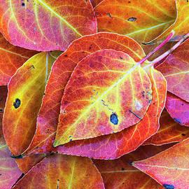Autumn leaves by Vishwanath Bhat
