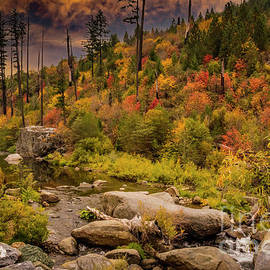 Autumn Morning American River by Mitch Shindelbower