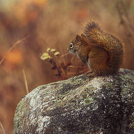 Autumn Mornings by Sue Capuano