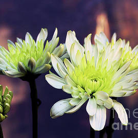 Autumn-mum's On Its Way by Michael May