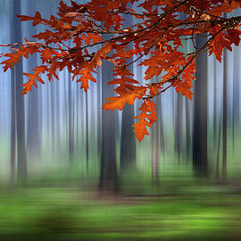 Autumn Oaks Dreamscape by Debra and Dave Vanderlaan