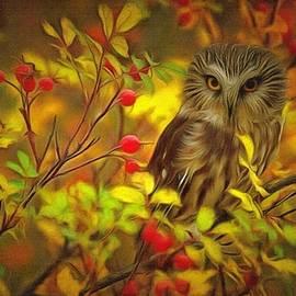 Autumn Owl Ii by Maciek Froncisz