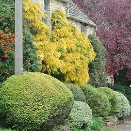 Autumn Paintbox 2 by Lynne Iddon
