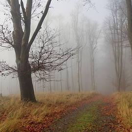 autumn path II by Ren Kuljovska