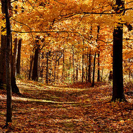 Autumn Path by Laurie Minor