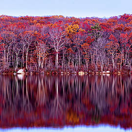 Autumn Red by Eddy Bernardo