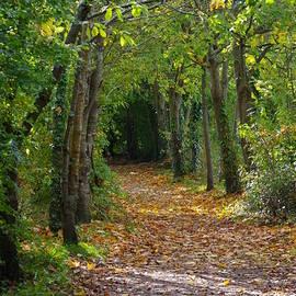 Autumn Riverside Walk, Totnes Devon UK by Lesley Evered