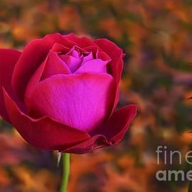 Autumn Rose by Abbie Shores