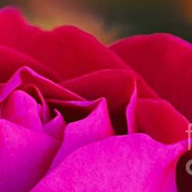 Autumn Rose Snippet One by Abbie Shores