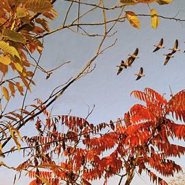 Autumn Sky by Alex Mir