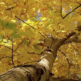 Autumn Sunshine by Dorothy Pinder