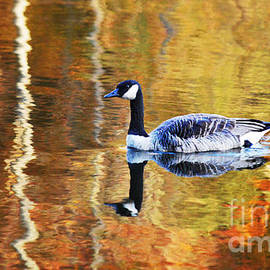 Autumn Tapestry On Golden Pond by Laurie Minor