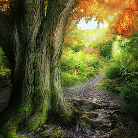 Autumn - The path to grannies house by Mike Savad