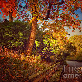 Autumn Tranquility - Central Park New York by Miriam Danar